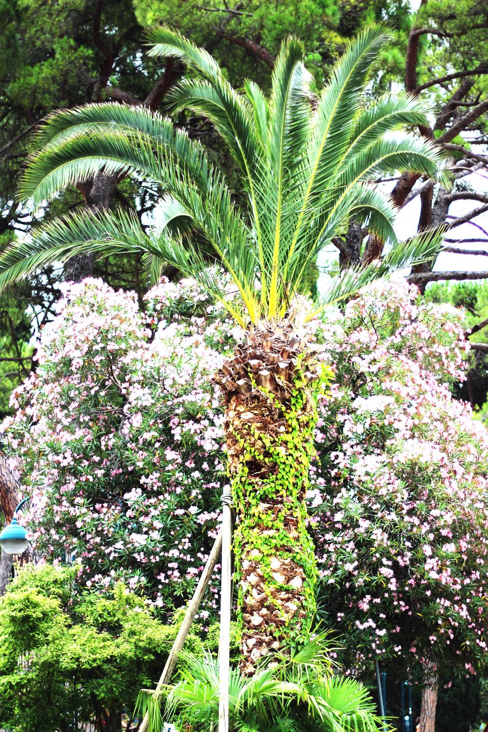 fatimayarie-palms-rivadelgarda-lagodigarda-lakegarda-flowers-img_0268