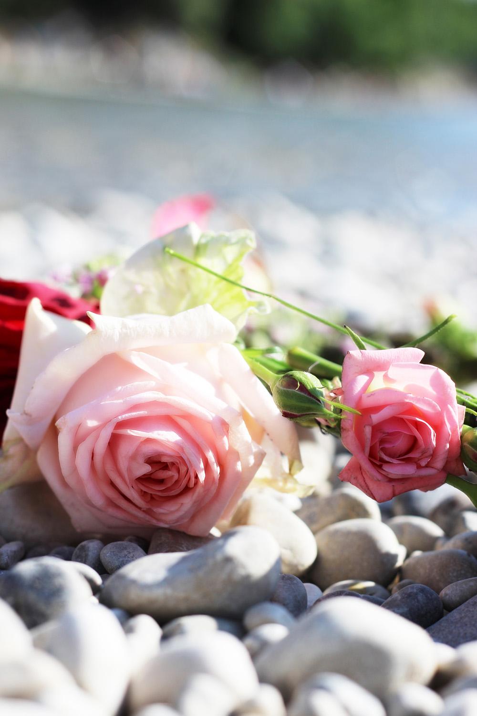 fatimayarie-pinkroses-blumenkranz-flowerwreath-miflora-img_9043