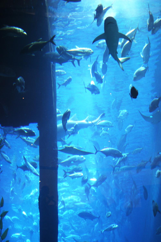 fatimayarie-sharks-aquarium-dubai-mall-uae-img_4239