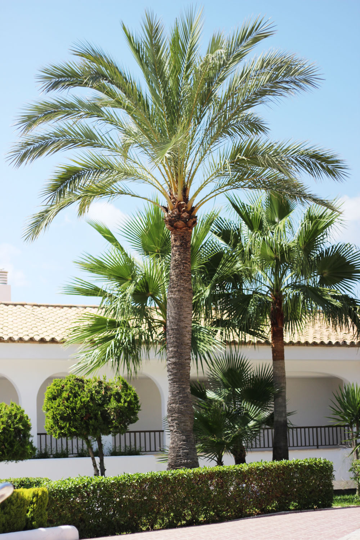 fatimayarie-mallorca-santaponsa-palms-beach-img_1435