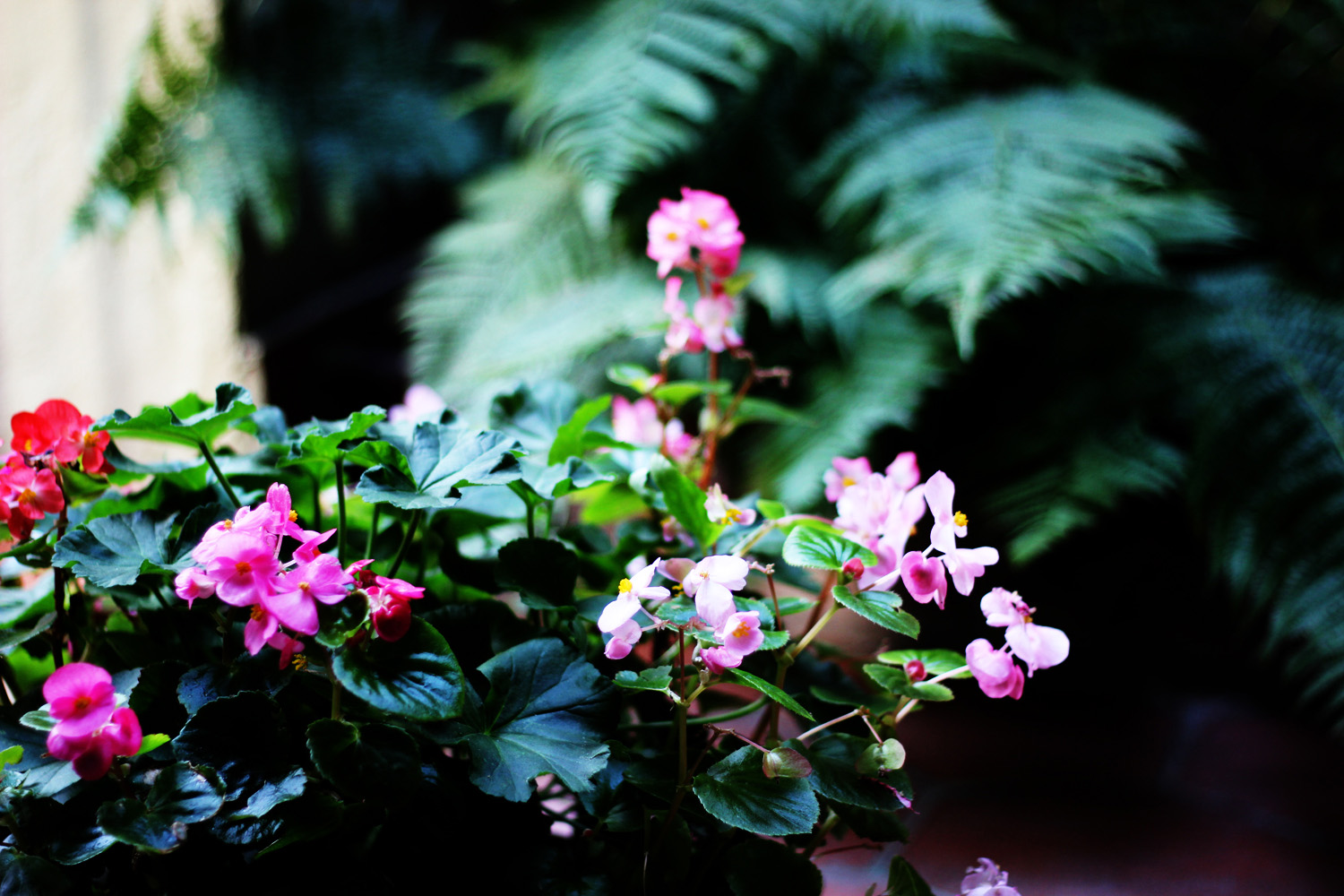 fatimayarie-pinkflowers-iammunich-patio-rainforest-munichblogger-img_6313